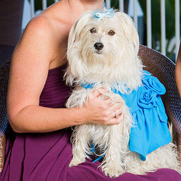 American Humane Association Hero Dog Awards - 2014 Finalists ...