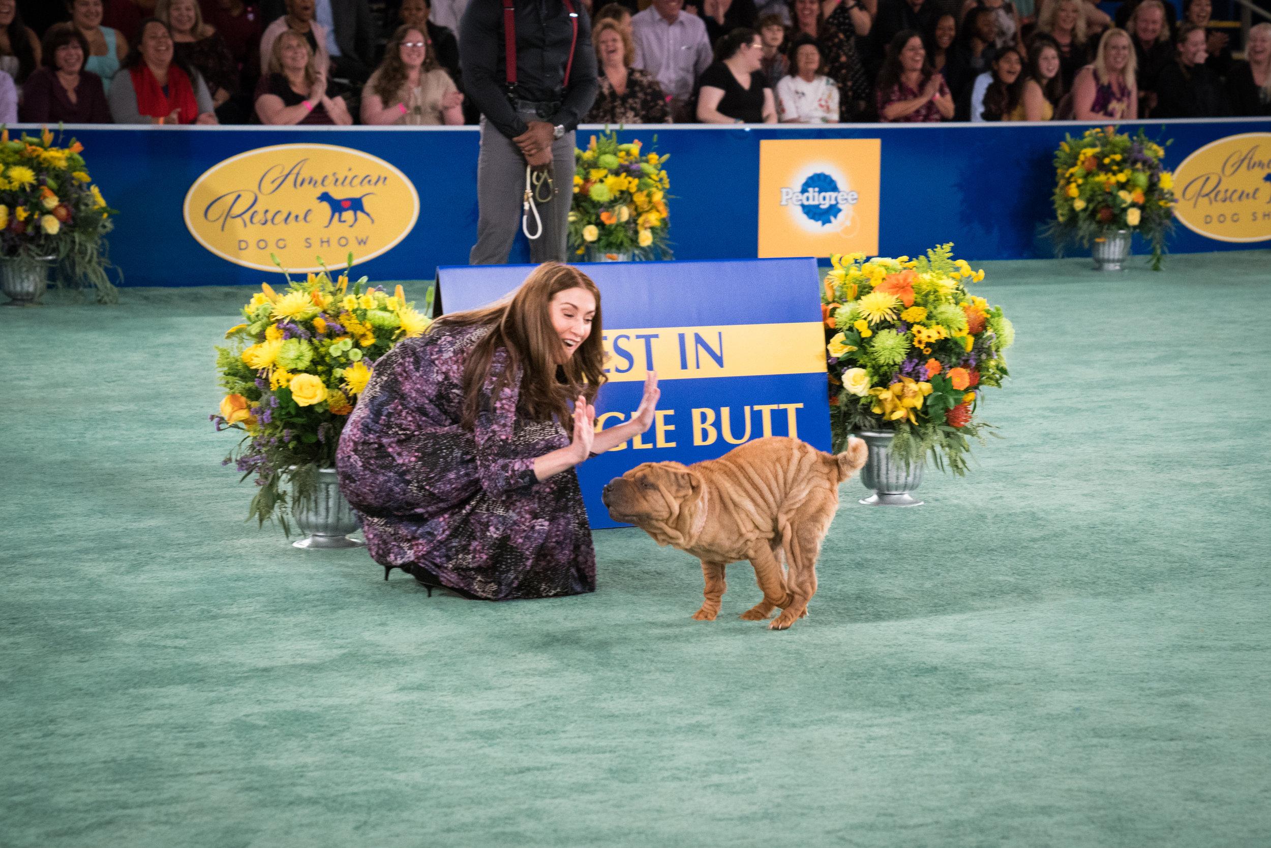 American Rescue Dog Show The Winners Hallmark Channel