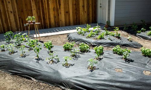 More Planting Tips Hallmark Channel