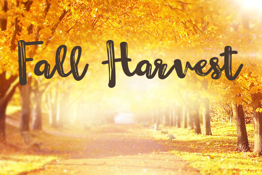 Image Result For Fall Harvest Movies Hallmark