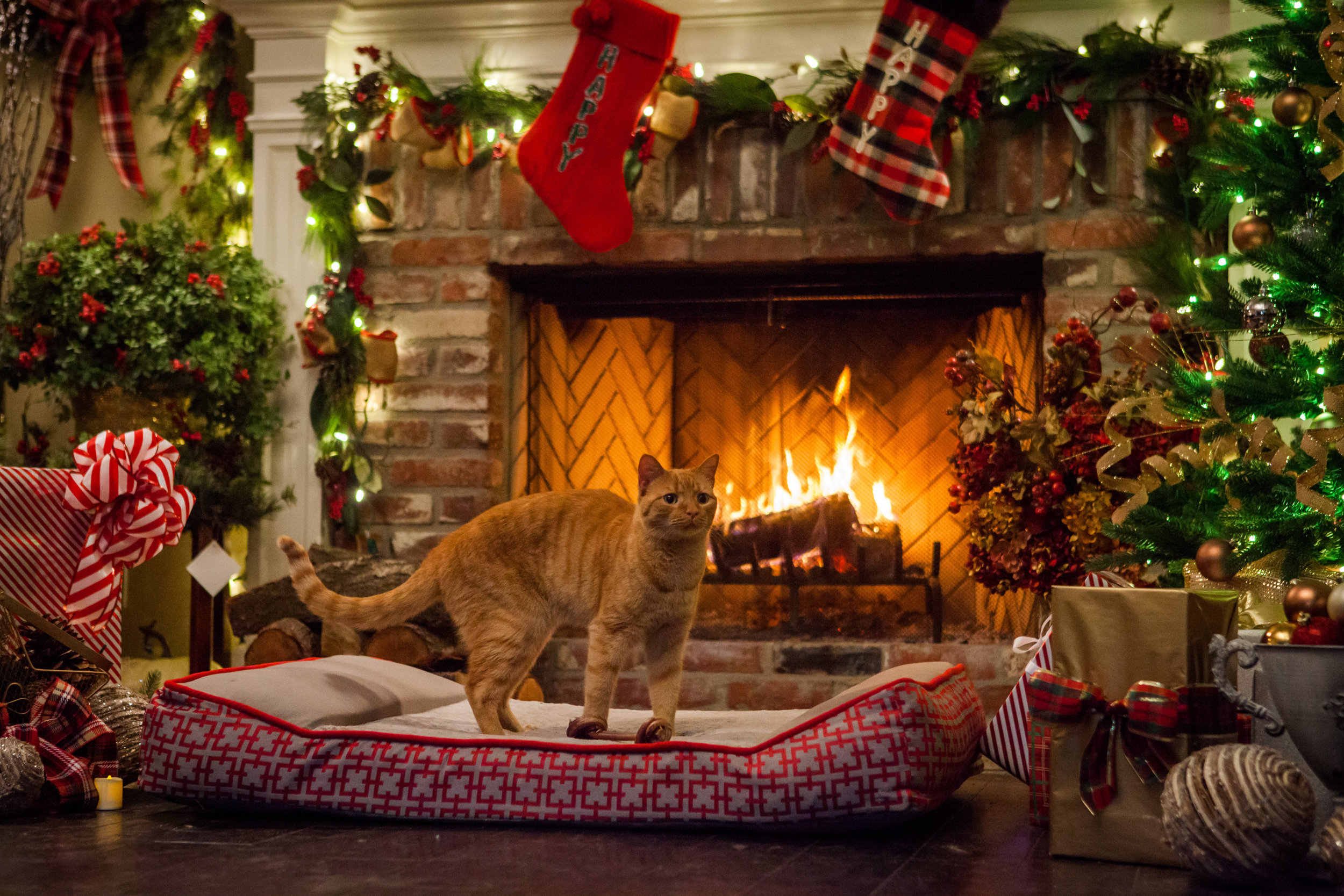photos a very happy yule log 8 hallmark movies and mysteries