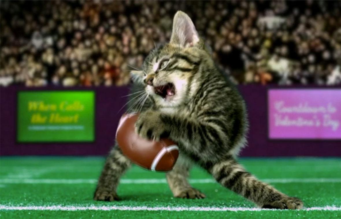Kitten Bowl  kittenbowl  Kitten