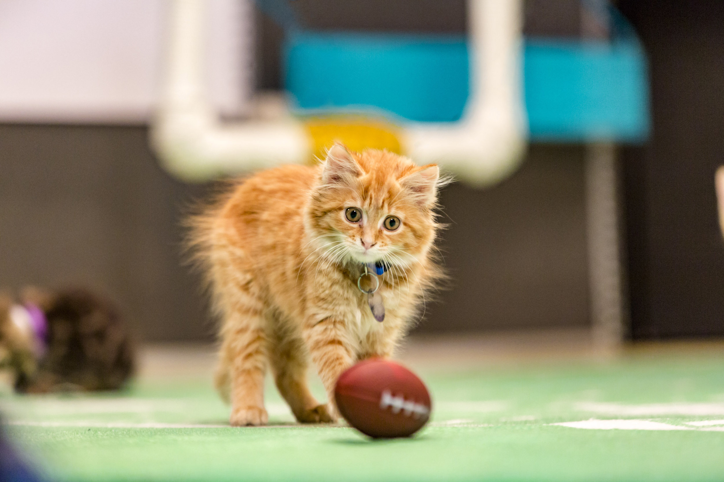 Image result for the kitten bowl