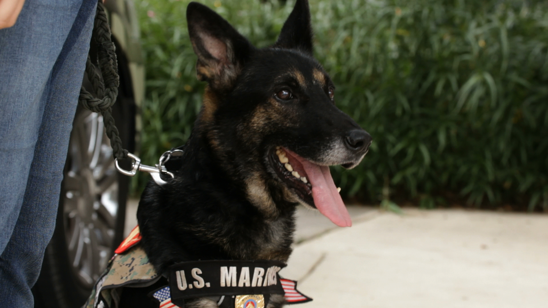 Military Dogs Category Rambo Hero Dog Awards