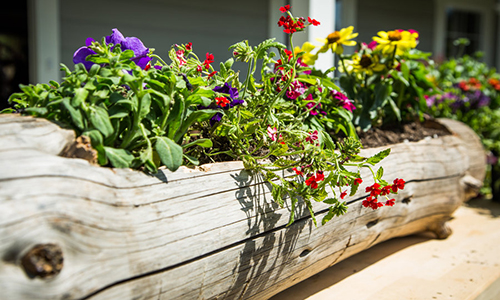 Anne Marie Johnson S Diy Log Planter With Summer Annual
