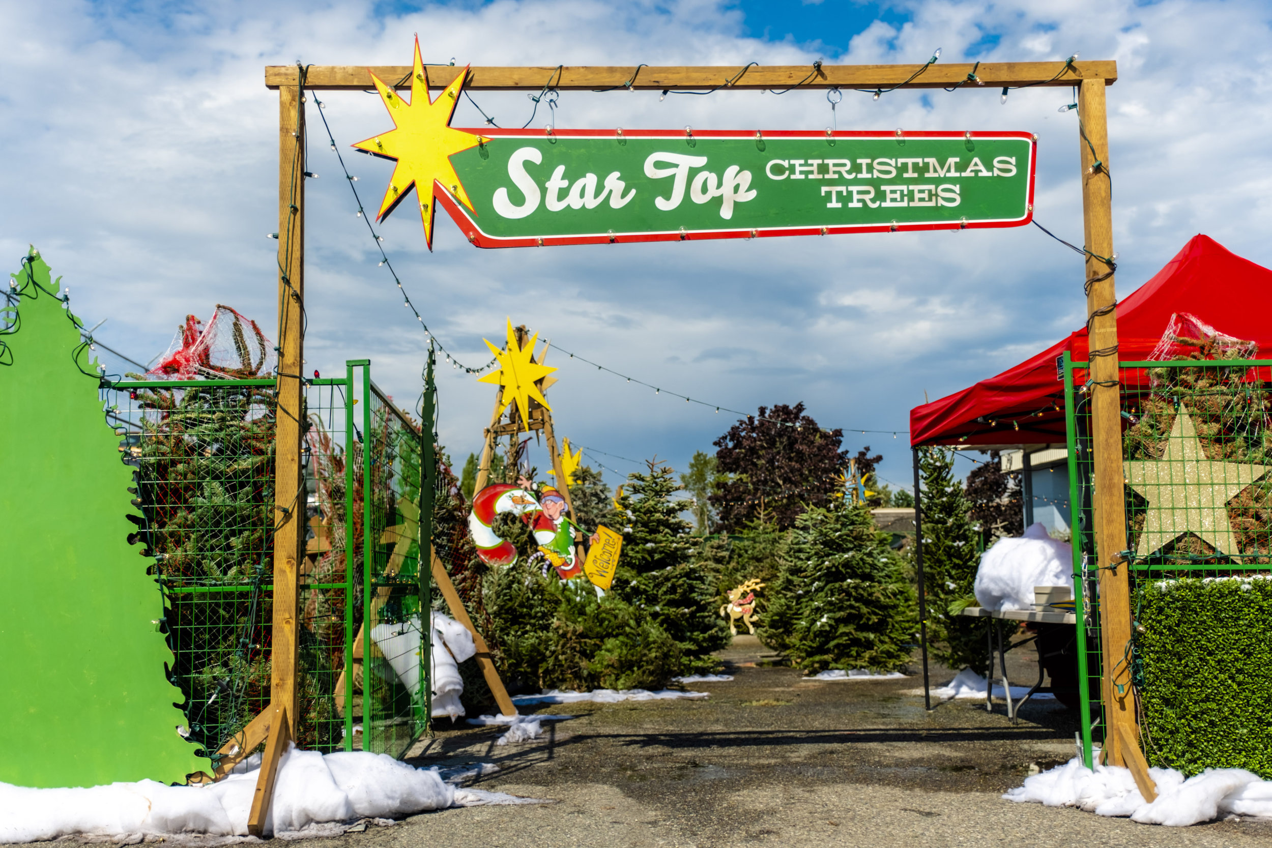 Photos from Christmas Under The Stars - 5