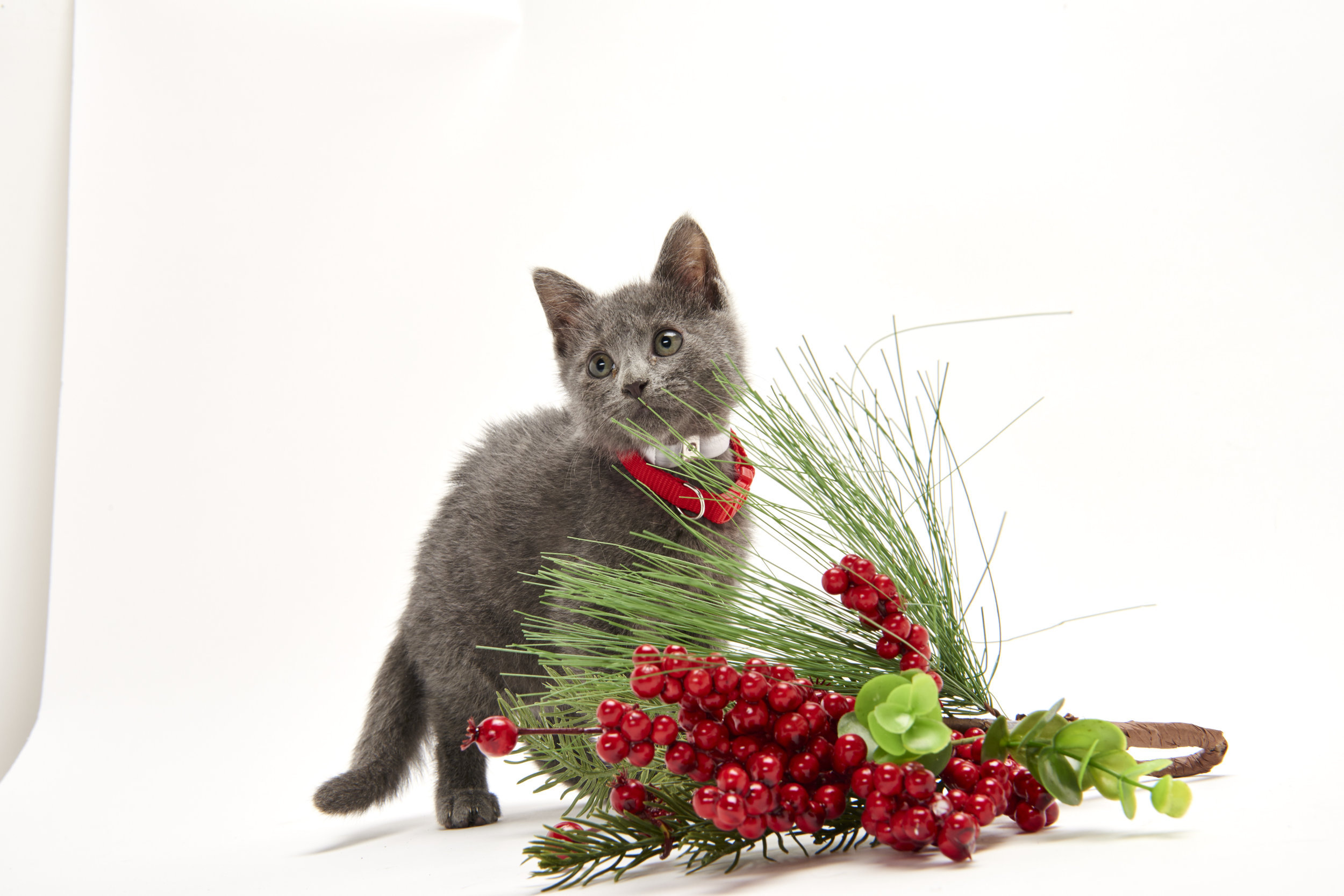 Kitten Bowl V: Christmas Kittens | Countdown to Christmas | Hallmark ...