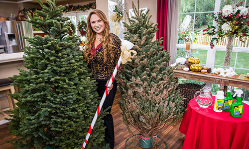 shirley bovshow 39 s tips on keeping your christmas tree fresh hallmark channel. Black Bedroom Furniture Sets. Home Design Ideas