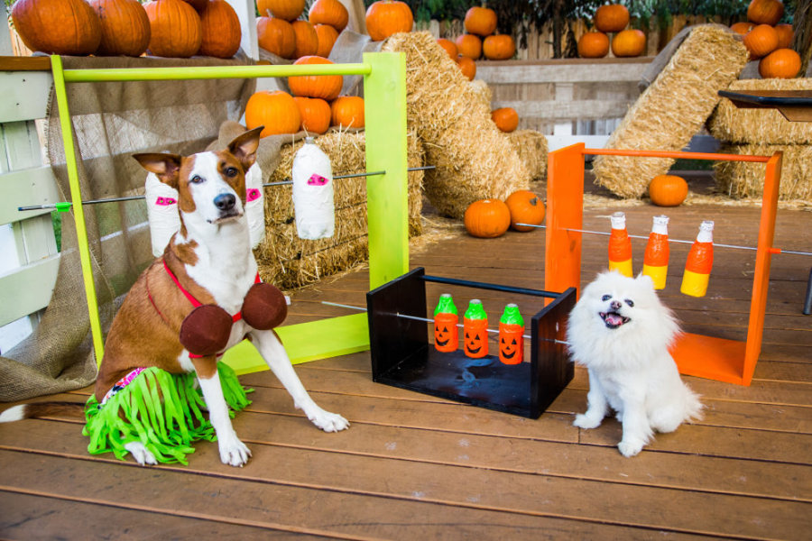 Diy Treat Dispenser Game For Pets With Laura Nativo Home