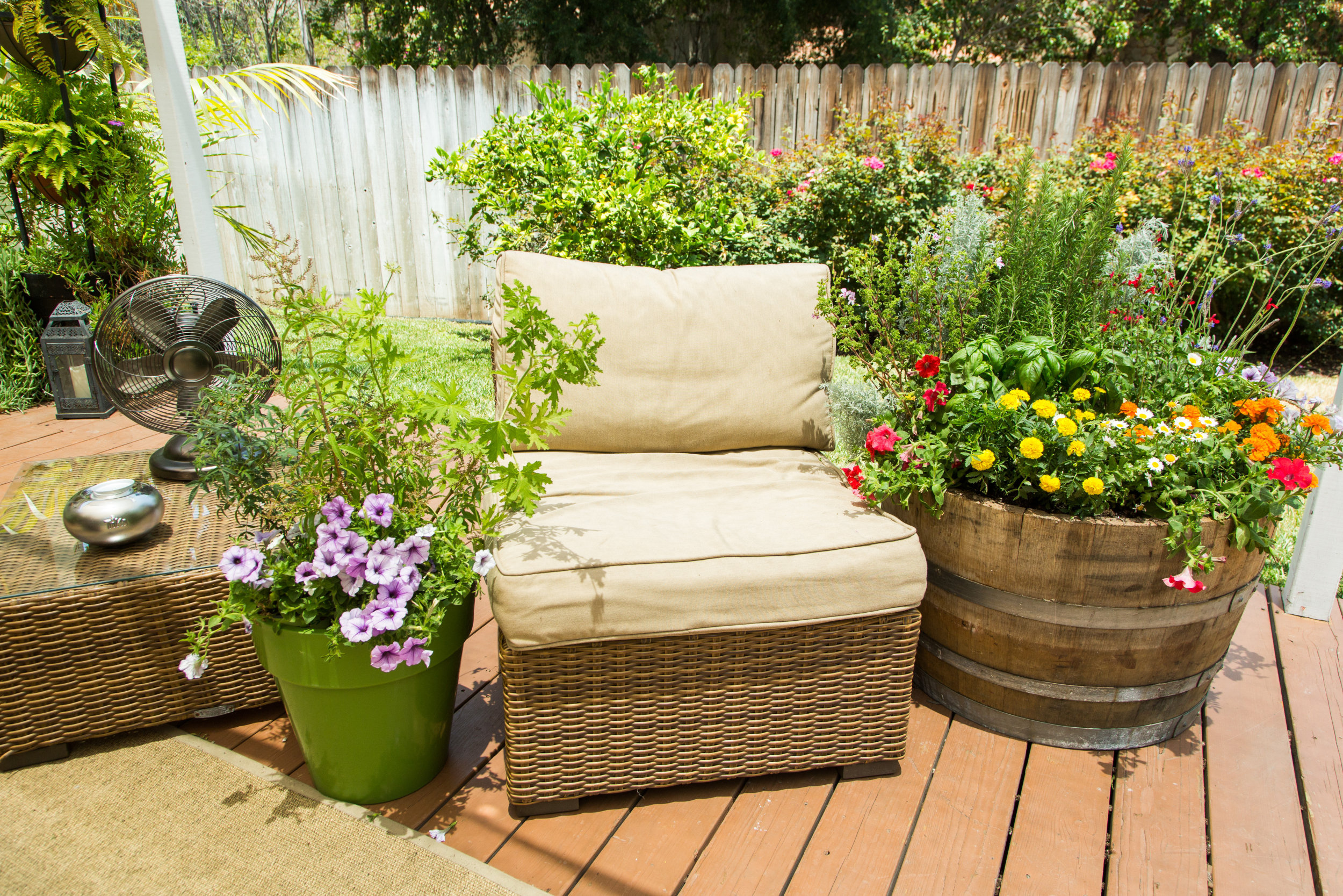 Mosquito Repelling Container Garden