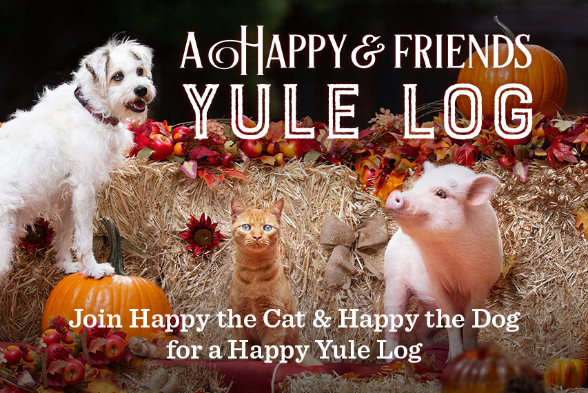 A Happy Friends Yule Log Hallmark Movies And Mysteries